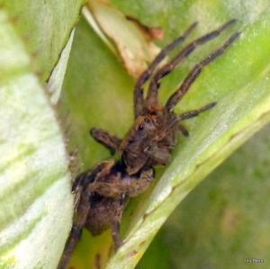 Aranha escondida na bromélia 02-04-2009 00-25-03