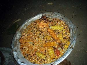 As baratas tornam o alimento impróprio para o consumo humano. Imagem em: http://cienciahoje.uol.com.br/noticias/2013/09/dormindo-com-o-inimigo