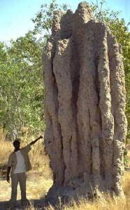 Cupinzeiro no Quênia.